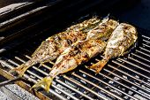 Grilling Fish On A Bbq Barbecue Grill Over Hot Coal. Preparing And Roasting Salema Porgy, Sarpa Salp poster