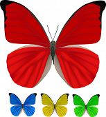 illustration with four color butterflies isolated on white background