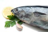 tuna on white close up
