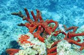 Colorful Coral Reef On The Bottom Of Tropical Sea, Red Sea Sponge, Underwater Landscape poster