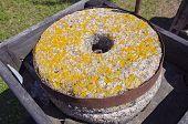 Ancient Millstone With Lichens