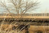 Rural Railroad Trestle