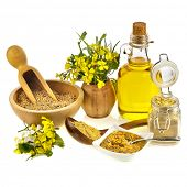 Mustard oil jar and powder, seeds, spoon and mustard flower blossom on white