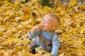 Smiling Kid In Autumn Leaves