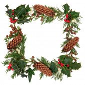 pic of english ivy  - Winter and christmas decorative border of holly - JPG