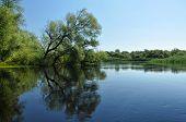 Bosque inundado en el delta del Danubio