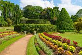 stock photo of royal botanic gardens  - Beautiful tropical Royal Botanical Gardens Peradeniya Kandy Sri Lanka - JPG