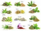 pic of peppermint  - Collection of fresh and dry aromatic herbs - JPG