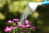 Water Can Watering A Flower Plant