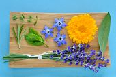 pic of borage  - Summer herbs and edible flowers on wooden plate on blue background - JPG