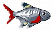 picture of x-ray fish  - An illustration of a cute x - JPG
