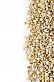 image of millet  - Organic millet grains separated from a white background macro zoom - JPG