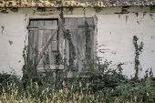 very old double doors covered with ivy