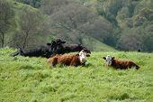 Expressive Cows