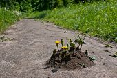 An Anthill On The Footpath