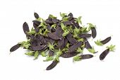 Heap of purple snow peas on white background