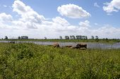 Landscape On Tiengemeten.