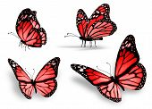 Four Red Butterfly, Isolated On White Background