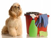 Cocker Spaniel With Cleaning Supplies