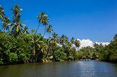Palms And Pond, Sri Lanka