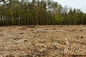 Deforestation And Logging