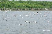 Flocks Of Seagull In Flight On Water