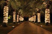 Palm Lane en noche iluminación, Jumeira, Emiratos Árabes Unidos