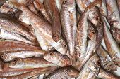 stock photo of mullet  - many red fresh fish mullet close up - JPG