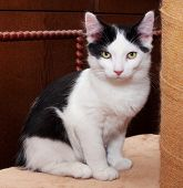 Black And White Kitten With Green Eyes Sitting
