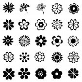 picture of organist  - beautiful many flower vector set - JPG