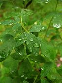 Plant After Rain