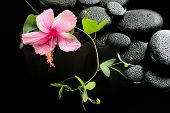 Beautiful Spa Concept  Of Delicate Pink Hibiscus, Green Tendril Passionflower And Zen Stones With Dr