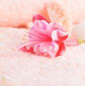 Travel Concept With Delicate Pink Flower Fuchsia, Seashells On Terry Texture, Closeup