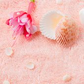 Spa Soft Concept With Delicate Pink Flower Fuchsia, Seashells On Terry Texture, Closeup