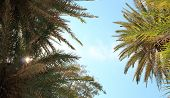 Palm Tree Leaves Naturally Framing The Sky