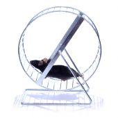 RATONCITO en una rueda de ejercicio
