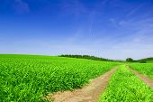 Green Field With Road And Blue Sky.