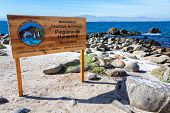 pic of shiting  - Sign for the Humbolt Pinguin National Reserve in Chile - JPG