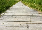 Wooden Path Over Moor Area With Reed
