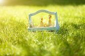 Little cute ducklings  in wooden basket on green grass, outdoors