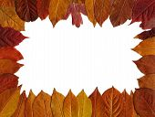 Red Autumn Leaves Frame