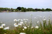 Daisies Near The River