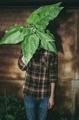 Man in plaid shirt standing hiding his face with large green leaves