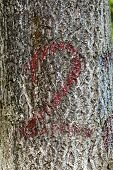 Closeup Photo Of The Number Two Painted Onto A Tree Trunk