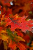 Abstract Framework Of Autumn Leaves With Specific Colors