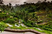 image of rainy day  - Balinese rice terraces on a rainy day close to Ubud in Bali - JPG
