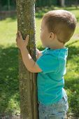 Child Clinging To A Tree