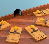foto of mouse trap  - Ambush with various traps - JPG