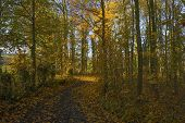 Track in a sunny forest at fall