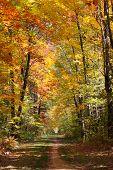 Autumn Forest Trail